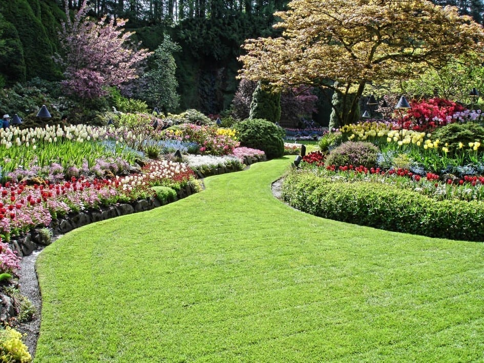 a beaitiful garden, lawn and flowers